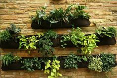 Deck Vegetable Gardening Containers | Search Results |