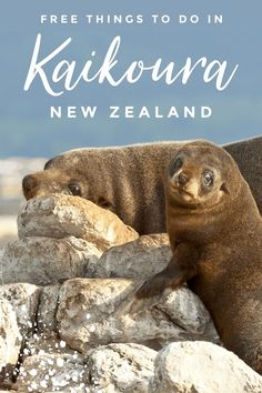 Looking for free & cheap things to do in Kaikoura, New Zealand? We've rounded up 10 of the best, so you can travel without breaking the bank!
