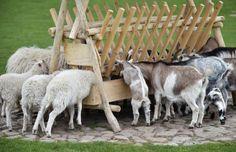 Sheep Pen, Pet Sheep, Sheep Farm, Sheep Feeders, Goat Hay Feeder, Run In Shed, Raising Goats, Sheep Breeds, Mini Farm