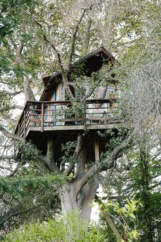 San Francisco Treehouse. A treehouse build 7.6 meters up in an 125-year-old coast live oak. Recycled, reclaimed and vintage materials have been used in the making. The whole construction has been put up in the tree without using any bolts or nails;...