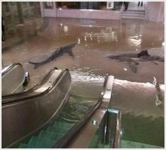 It looks so real!<--that's because it is. This photo was taken at an aquarium after the shark tank broke.