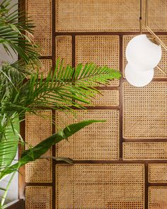 A conceptual Thai Restaurant which was to feel like a tropical paradise