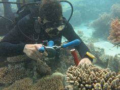 We have been lucky enough to welcome Erwan Sola to the island, Erwan is currently undertaking his PHD research on #Vamizi, His latest activity consists of tagging individual corals to be surveyed in a yearlong study. Numbered tags are deployed by drilling a small hole in a rock next to the #corals (to avoid harm to the coral). Tags are then anchored firmly and a sample is collected for microscopic analysis. Already a 100 corals tagged by end of August 2014.