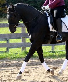 What to do When Your Horse Pulls