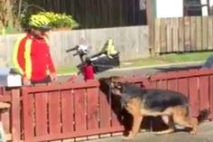 Pone una cámara oculta y captura al cartero haciendo esto a su peligroso perro #viral
