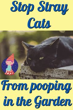 How to Keep Cats Out of the Flower Bed and Stop them from Pooping in the Garden. - Crafty Little Gnome Cat Repellant Outdoor, Cat Garden, Garden Pests, Garden Insects, Keep Cats Away, Show Goats, Bird Netting, How To Cat, Kitten Care