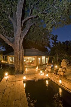 Exclusive & intimate Zarafa Camp in Botswana's beautiful Selinda Reserve harks back to the glorious safaris of bygone pioneers & daredevil explorers African Wild Dog, Great Plains, Top Place, Wild Dogs, Conservation, Wilderness, Acre, Giraffe, Elephant