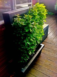 wildmountainfarms@gmail.co  : beautiful verticle garden with chocolate mint
