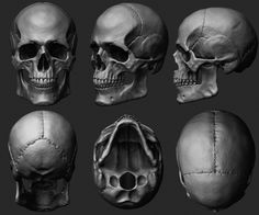 Skull - Anatomy Study, Marco Nogueira on ArtStation at https://www.artstation.com/artwork/skull-anatomy-study-0d1e6036-7446-4939-8141-12aaedab5fd3