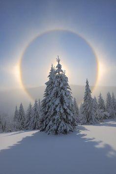 Kreis um einen verschneiten Baum-  die Natur ist einfach unglaublich