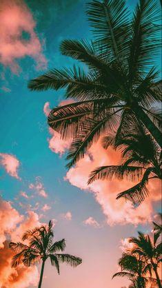 Tumblr Wallpaper, Look Wallpaper, Palm Wallpaper, Iphone Background Wallpaper, Aesthetic Pastel Wallpaper, Scenery Wallpaper, Aesthetic Backgrounds, Aesthetic Wallpapers, Wallpaper Wallpapers