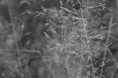 Black and white #photography #art #outside #nature #blackandwhite #b&w