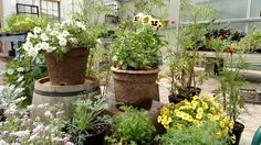 #localfarmstand, #urbangardening, #organicurbangarden