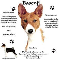 I love my Besenji!
