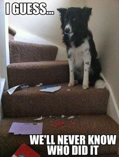 30 Animal pictures with captions, animal captions, animal memes Funny Dog Memes, Funny Cute, Funny Dogs, Cute Dogs, Hilarious, Funny Captions, Funny Stuff, Love My Dog, Cutest Animals