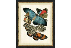 Butterfly Grouping I, Ebony Frame