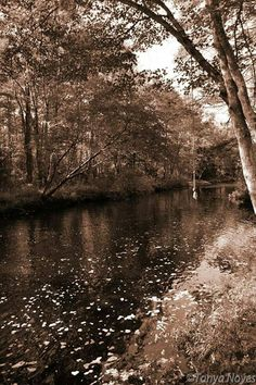Rope swing and river in Sepia tone