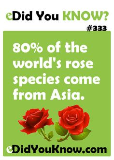 80% of the world's rose species come from Asia. http://edidyouknow.com/did-you-know-333/