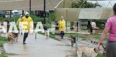 Πύργος: Πλημμύρισε το καταφύγιο των αδέσποτων στη Συντριάδα- Mέσα στο νερό τα σπιτάκια των σκύλων- ΦΩΤΟ