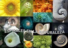 Resultado de imagen de espirales en la naturaleza