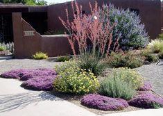 Xeriscape front garden in Albuquerque Desert Landscaping Backyard, Water Wise Landscaping, Succulent Landscaping, Modern Landscaping, Landscaping Plants, Front Yard Landscaping, Landscaping Ideas, Landscaping Software, Modern Backyard