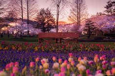Spring sunset by Hidenobu Suzuki on 500px