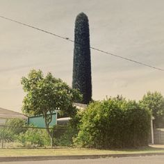 Photos of Cell Phone Towers Ridiculously Disguised as Trees - Feature Shoot