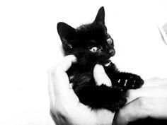 My quite biter black cat
