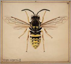 Scientific Illustrations #arteducation #scientificillustration