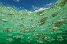 @tedgrambeau -  Peak hour tropical island style... #offthegrid @ninamuresort @aquatech_imagingsolutions @nikonaustralia #underwaterphotography #photographyblog #underwater #tropicalisland #islandlife #tahiti #mynikonlife #aquatech #tedgrambeau #justaddwater #Regrann