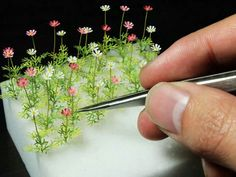 Mini flowers - making a mini meadow! ♥♡♥