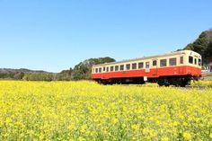 絶景!菜の花畑と桜が楽しめる、ぶらり小湊鉄道の旅 - Plat by NAVITIME