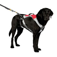 Omnijore Joring System for Dogs - Red Currant - Small  | The Ruffwear Omnijore System is the ideal restraint gear for outdoor use! Great for skijoring, mountainboard-joring, skatejoring, bikejoring, or canicross, unique design allows for hands-free control!  Designed for use in conjunction with Ruffwear's Omnijore Hipbelt for complete security and activity!