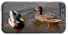 Wading Ducks iPhone 6 Case ~ A pair of beautiful Mallard ducks wading in icy water at Red Butte Garden in Salt Lake City, Utah.  Available on iPhone 6/6Plus/5/5s cases and Samsung Galaxy S4/S5/S6 cases. www.ronablack.com