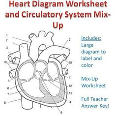 Heart structure foldable big foldable for interactive notebooks heart diagram and circulatory system mix up great review ccuart Choice Image