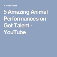 5 Amazing Animal Performances on Got Talent - YouTube