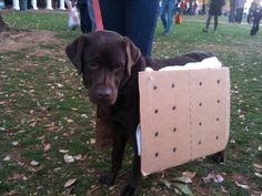costume ideas for chocolate labs - Google Search
