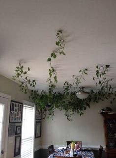 48 ideas for plants hanging from ceiling house - Ideen rund ums Haus - Hang Plants From Ceiling, Fake Plants Decor, House Plants Decor, Plant Decor, Ceiling Hanging, Decorating With Fake Plants, Things To Hang From Ceiling, Vine House Plants, Hanging Plant Hooks