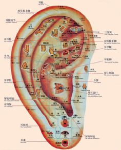 Ear is a complete microsystem of the human body, like a little map showing the condition of organs. We use ear acupuncture to treat alcohol and drugs addiction, mental disorders, obesity, insomnia, pain and more.  Be your own doctor: Massage both ears by rubbing them daily could improve your general health!