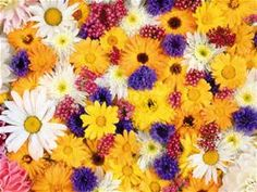 flowers - Visicom Yahoo Image Search Results