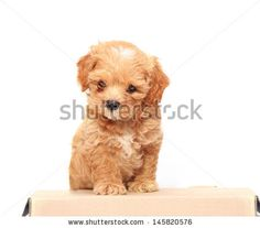 Puppy and paper box on white background