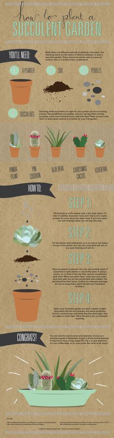 how to plant a succulent garden, the infographic @thesnugonline