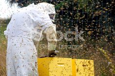 Beekeeper and Beehives royalty-free stock photo Stock Imagery, Save The Bees, Bee Keeping, Image Now, Royalty Free Stock Photos, Beekeeping