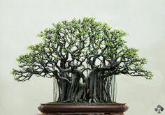 top_bonsai_20111228_1040468535