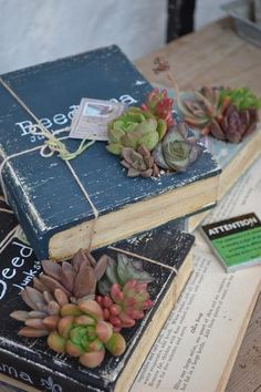 Succulents and book centerpiece