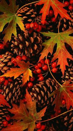 Herbst - autumn pine cones and leaves Fall Pictures, Fall Photos, Fall Leaves Pictures, Autumn Day, Autumn Leaves, Winter, Autumn Nature, Maple Leaves, Autumn Scenes