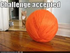 """15 Hilarious """"Challenged Accepted"""" Moments - Caturday 
