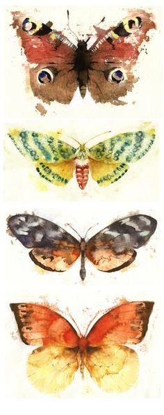 Butterflies and Moths by kate osborne