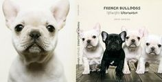 love sharon montrose! i have this book & would highly recommend it if you want to see some of the cutest frenchie pics ever :)