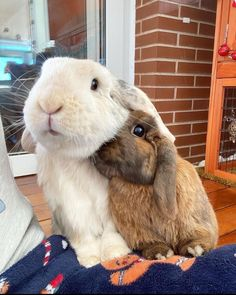 Animals Beautiful, Cute Animals, House Rabbit Society, Cute Buns, Pets, Bunny Bunny, Bun Bun, Anxiety Help, Ferrets